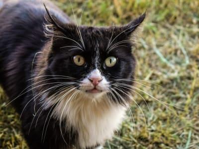 cat 2879137 960 720
