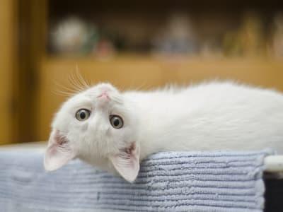 kitten 1285341 640