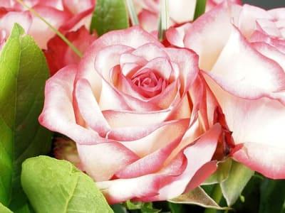 rose-2939944_640.jpg