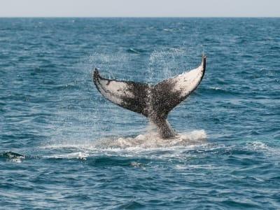 whale-630256_1920.jpg
