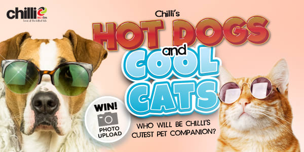 TAS LNC CHL hot dogs and cool cats generic 1200x600
