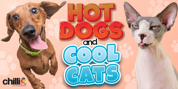 Hot Dogs Cool Cats