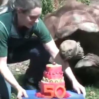 turtle birthday.jpg