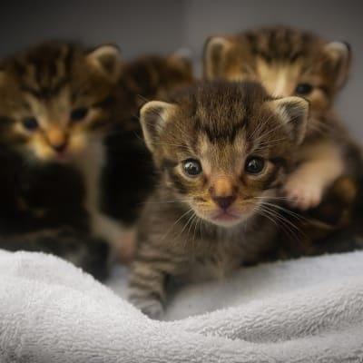 kittens 1824367 960 720 1