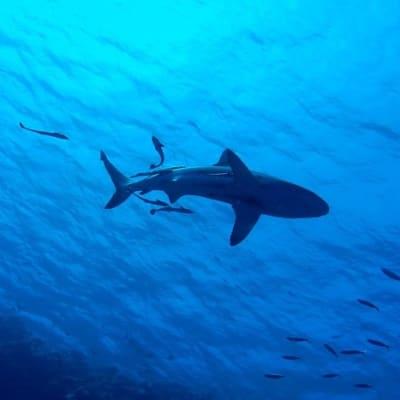 shark-2683184_960_720 (1).jpg