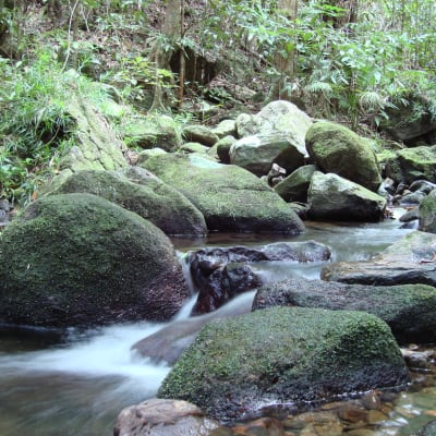 Mossman Gorge - Daintree National Park