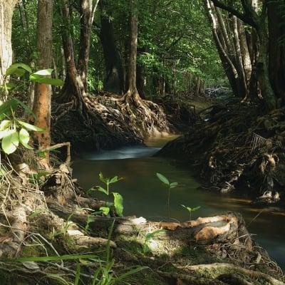rapid creek no credit