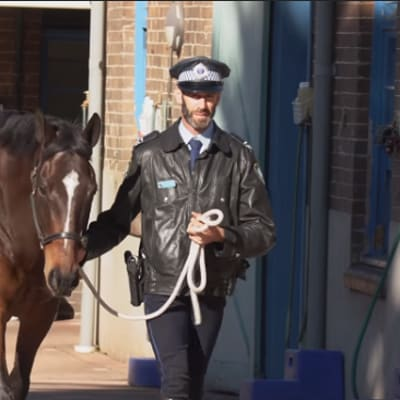 NSW_Police_Horse_Tobruk_edit.png
