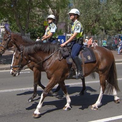 Police_Horses.jpg