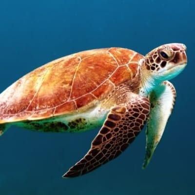Sea_Turtle_edit.jpg