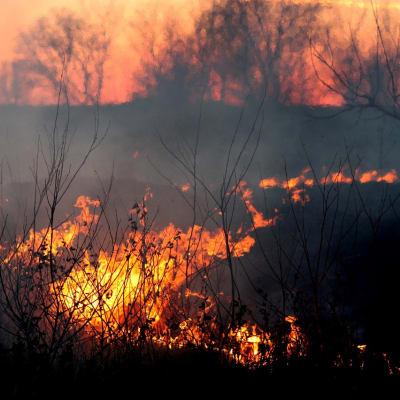 fire-1265718_1280.jpg