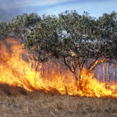 grass_fire_CSIRO_edit.jpg