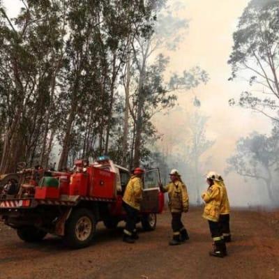 Cops to probe heinous northern NSW blaze 650x433