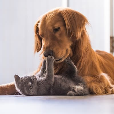 cat dog shutterstock 507810382 600x400