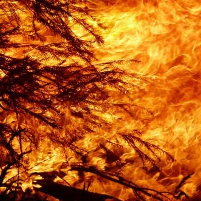 fire 3814159 640