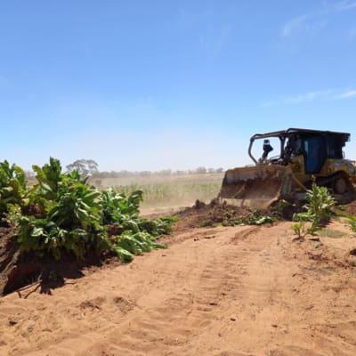 Kyalite crop destruction