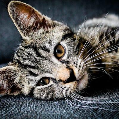 cat 1853372 1920