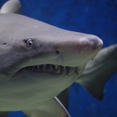 shark 674867 640
