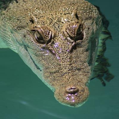 crocodile 4929825 640