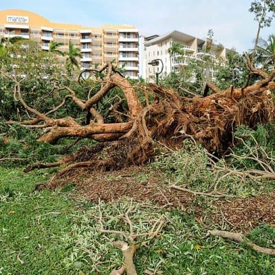 800px-Cyclone_Marcus_in_Darwin__Damage_in_Bicentennial_Park_08.jpg
