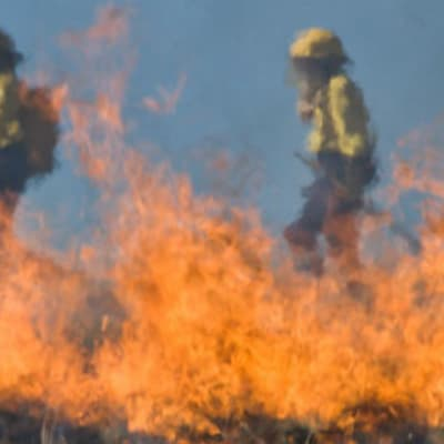Firefighters-CC0-Creative-Commons.jpg