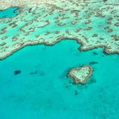 Heart_Reef1.JPG