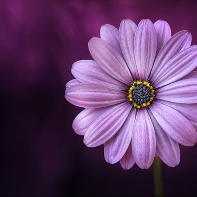 Purple Flower Pixabay.jpg