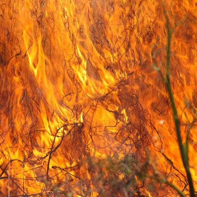 burning-grass-1165823_960_720.jpg