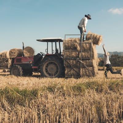 hay-bales-5729625_1280.jpg