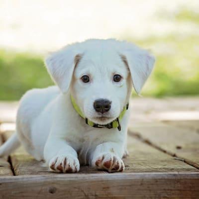 puppy-1903313_1920.jpg