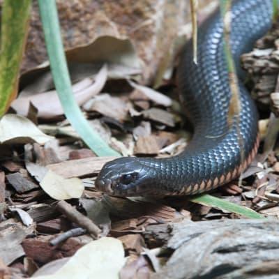 snake-185724_1280.jpg