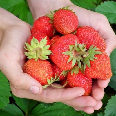 strawberry_hands_2.jpg
