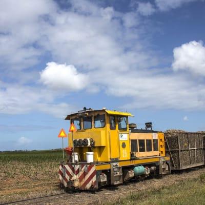 sugarcanetrain.jpg