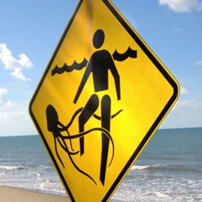 surf_life_saving_qld_mirnada_stingers.jpg