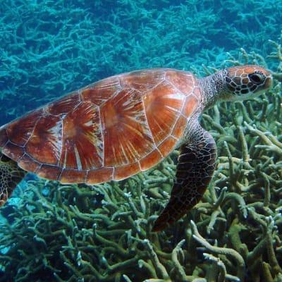 turtle-543444_1280.jpg