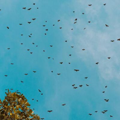 Bats_John_Mackenzie_4CA.jpg