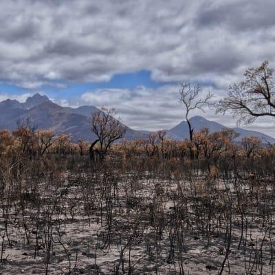 Bushfire_-_Free.jpg