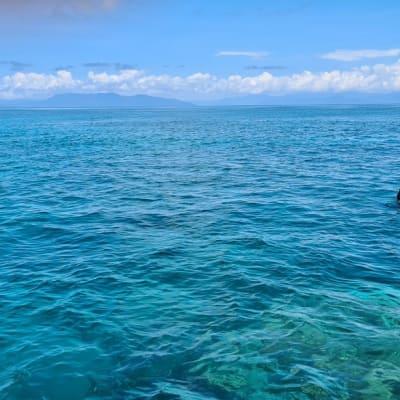 Reef_-_Swimmer.jpg