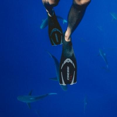 Shark_Attacks_on_the_rise_John_Mackenzie_4CA.jpg