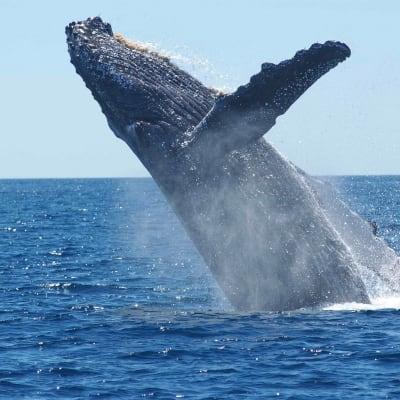 Whale - Free.jpg