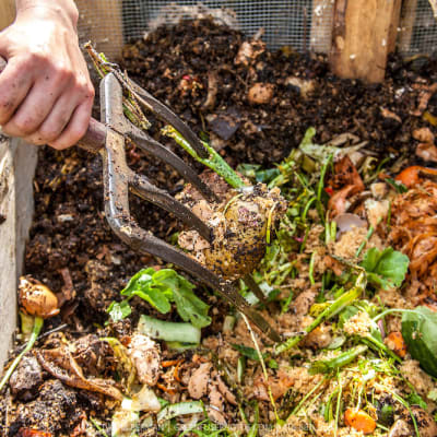 compost 20170302 100706