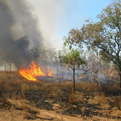 1024px-Bushfire_Australia.jpg