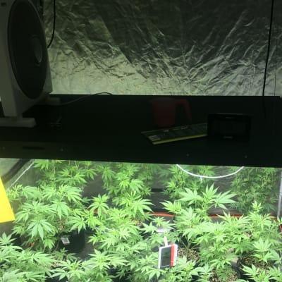 12_August._Drug_set_up_busted_Alice_Springs.jpg