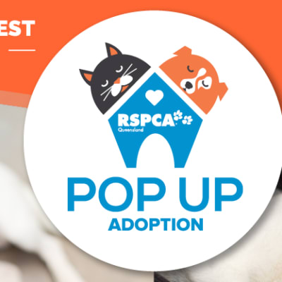 RSPCA Pop Up Adoption 2017