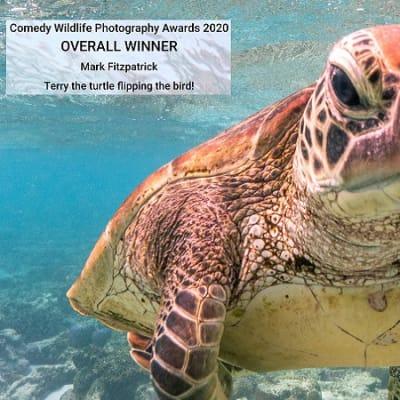 turtle_pic.jpg