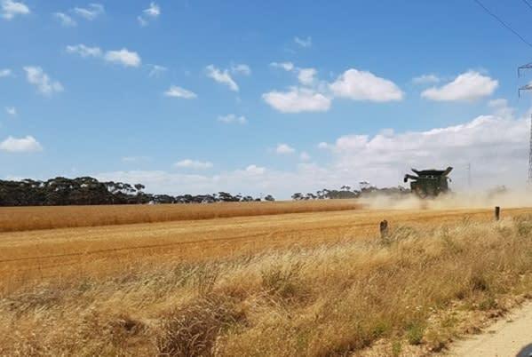 Harvest pic