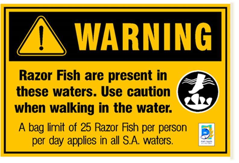 RAZOR_FISH.jpg