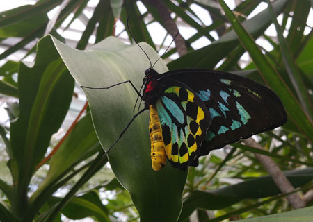 The-Australian-butterfly-sanctuary-image-2-main.jpg