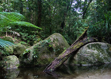 Daintree_National_Park.jpg