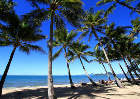 Palm-cove-flickr.jpg